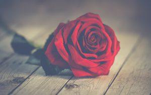 Isha – Convirtiéndonos en amor incondicional